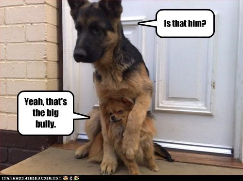 bully confirmation german shepherd Hall of Fame identification pomeranian protecting protection - 4323944704