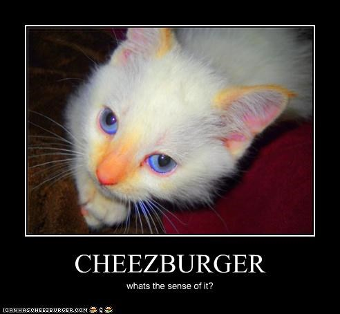CHEEZBURGER whats the sense of it?
