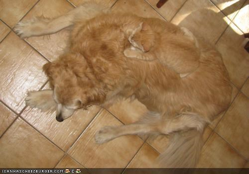 camouflage,dogs,friends,goggies r owr friends,hiding,Interspecies Love,nap,on top