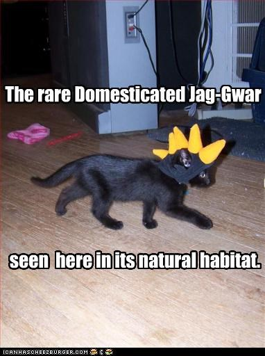 The rare Domesticated Jag-Gwar seen here in its natural habitat.