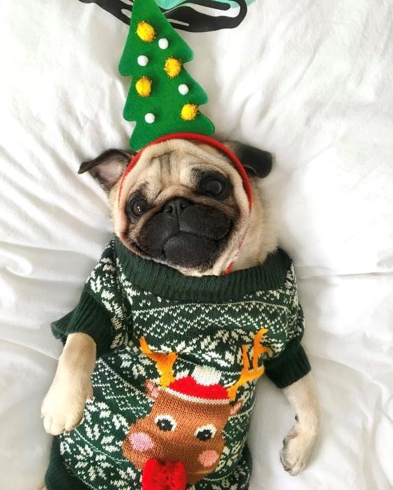pets with Christmas spirit