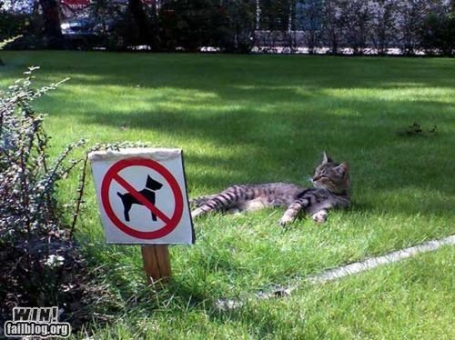 animals Cats cute signs - 4324631552