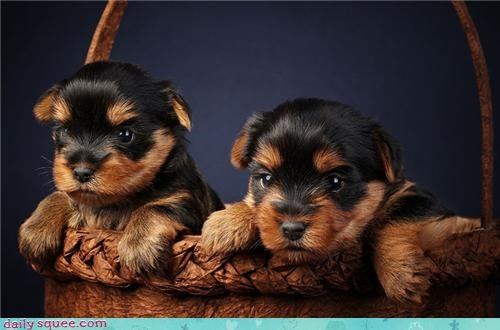animal baby cute dogs puppy - 4326000384