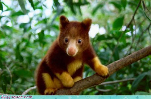 baby,cute,floof,Fluffy Friday,tree kangaroo