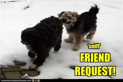 action friend request Hall of Fame language mixed breed sniff sniffing terrier whatbreed