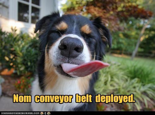 australian shepherd deployed Hall of Fame machine nom technology tongue - 4326857472