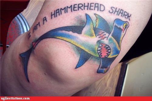 animals sharks words - 4327164160