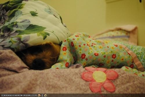 afraid bed blanket cat covers cowering cyoot puppeh ob teh day fear hiding kitteh puppy scared scary whatbreed