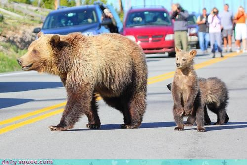 baby,bear,cub,cute,squee spree