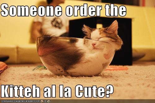 a la,bowl,caption,captioned,cat,cute,dish,food,noms,order,question,sleeping,someone