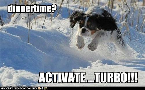 activate,charging,dinner,dinnertime,jumping,papillon,question,realization,snow,speed,time,turbo