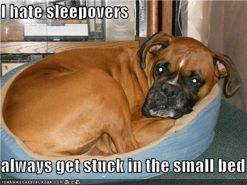 bed boxer complaining difference dislike do not want hate size sleepovers small stuck uncomfortable