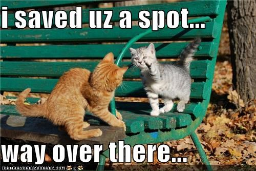 bench caption captioned cat Cats dis kitten mean over there pointing saved seat spot tabby - 4328112128