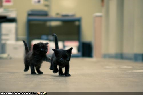basement cat cyoot kitteh of teh day kitten playing tag two cats - 4328377600