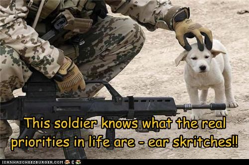 dogs pets petting puppy soldier - 4329072896