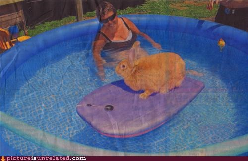 animals,Bunday,bunny,cute,pool,wet,wtf