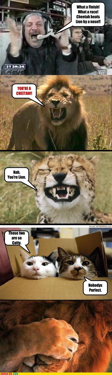 animals,cat,Cats,cheetahs,facepalm,lions,puns