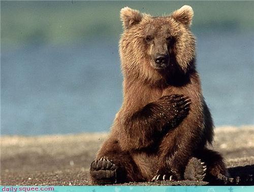 baby bear cute heart - 4329771008
