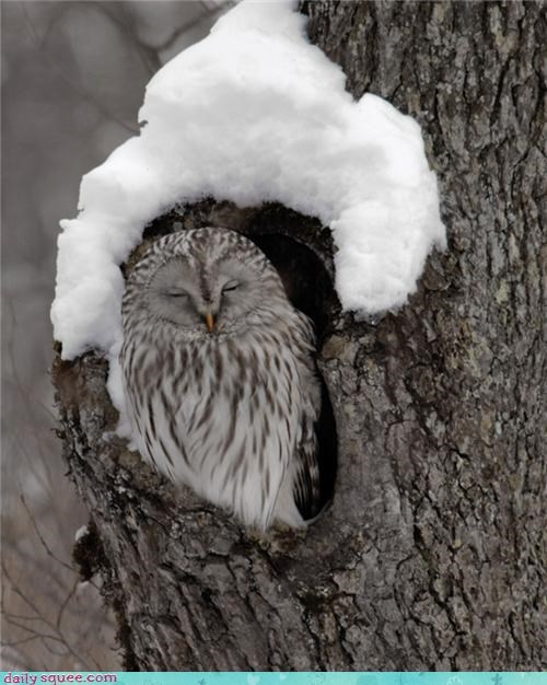 Day of Rest Owl sleepy tired winter - 4329774080