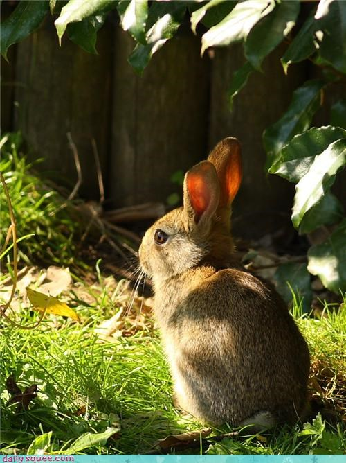 ears,garden,grass,happy bunday,leaves,rabbit