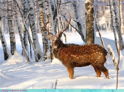 antlers,deer,Forest,snow,spotted