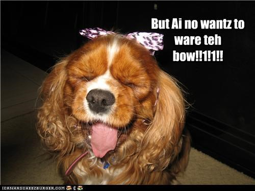 bow,cocker spaniel,costume,dislike,do not want,dressed up,upset,wear