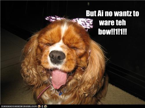 bow cocker spaniel costume dislike do not want dressed up upset wear - 4329866752