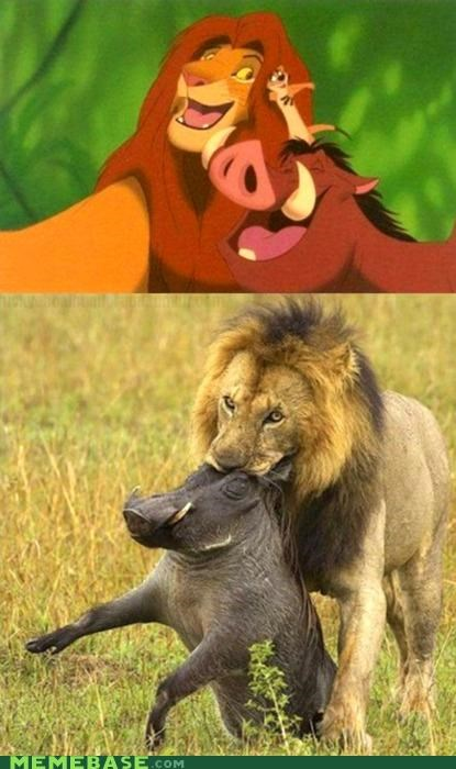 at first i was like Memes national geographic pumbaa reality timon - 4330174208