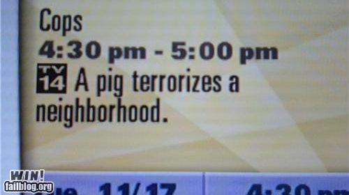 description pig television