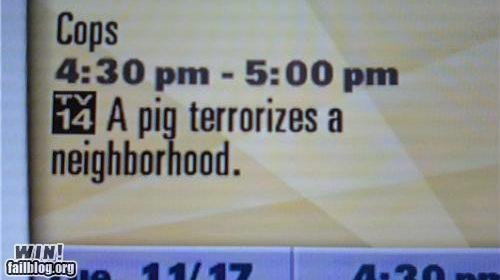 description pig television - 4330322176