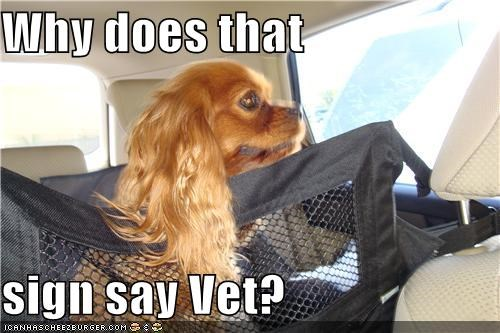 car,carrier,confused,fooled,lhasa apso,question,reads,realization,saying,sign,tricked,vet,why,word