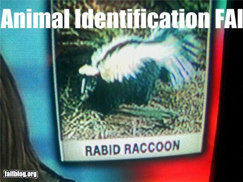 animals,failboat,g rated,raccoons,skunks,television