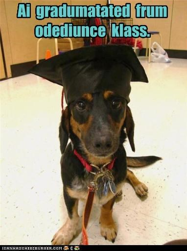 class,german shepherd,graduate,graduated,graduation,mixed breed,obedience,puppy,school