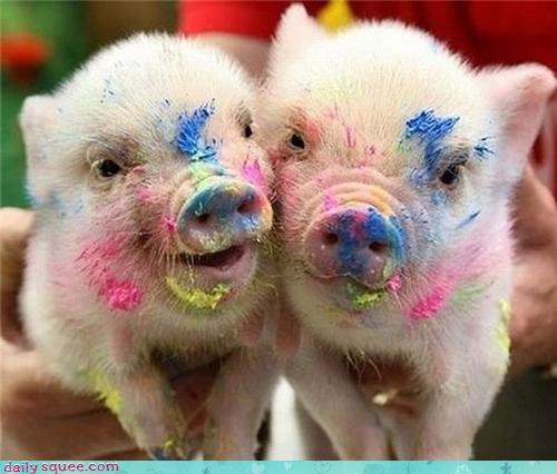 Hall of Fame mess nose paint pig piglets snout
