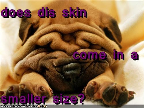 folds question shar pei size skin small smaller too big wrinkles - 4330963968