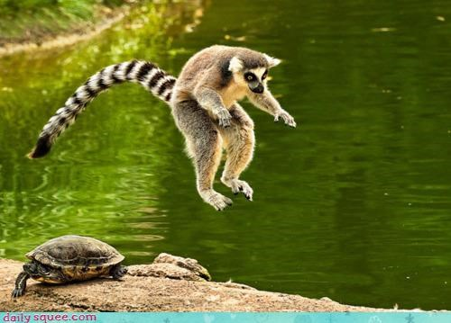 acting like animals annoyed bored displeased frog frustrated game leap frog lemur turtle unfun - 4331414272