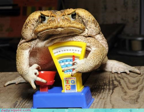 acting like animals,cane toad,cold blooded,disagree,do not want,explanation,justification,literalism,obesity,scale,tipping,toad,upset,weight