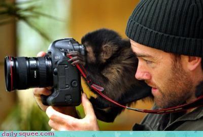 acting like animals ashamed camera disgusting gross human looking monkey peeking perching shoulder sick sickened standing view viewfinder - 4331424512