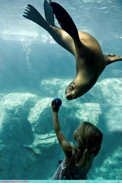 acting like animals ball confused do not understand girl glass human offended playing seal separation - 4331430656