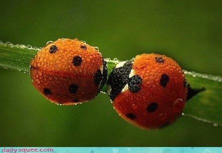 bug insect kisses lady bug polka dot stem - 4332541184