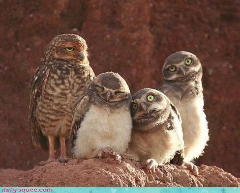 birds Fluffy owls family photo squee derp - 4332940288