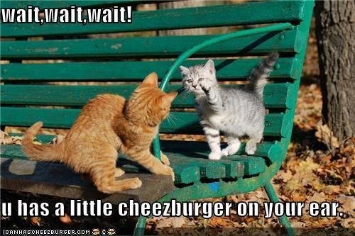 Cheezburger Image 4333505024