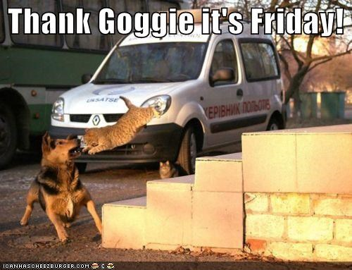 afraid,ambush,attack,attacked,cat,fear,german shepherd,jumped,surprised,thank-goggie-its-friday