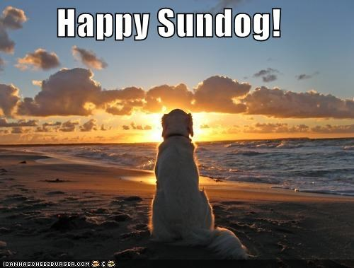 beach gazing golden retriever Hall of Fame happy happy sundog sun Sundog sunset