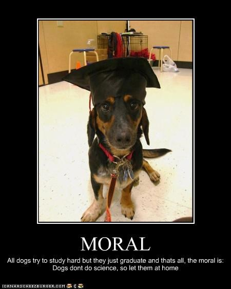 MORAL All dogs try to study hard but they just graduate and thats all, the moral is: Dogs dont do science, so let them at home