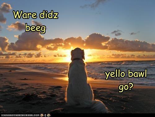 Cheezburger Image 4333880064