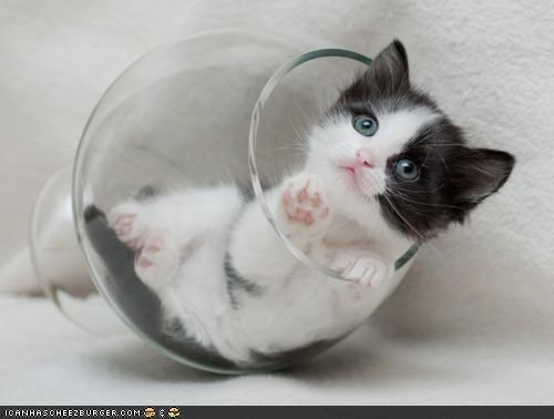 alcohol cyoot kitteh of teh day drinking glass intervention - 4334390016