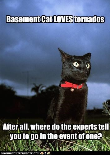 Basement Cat LOVES tornados After all, where do the experts tell you to go in the event of one?
