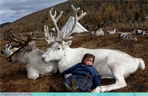 baby,Forest,harmony,mongolia,nap,peace,reindeer,squee,white