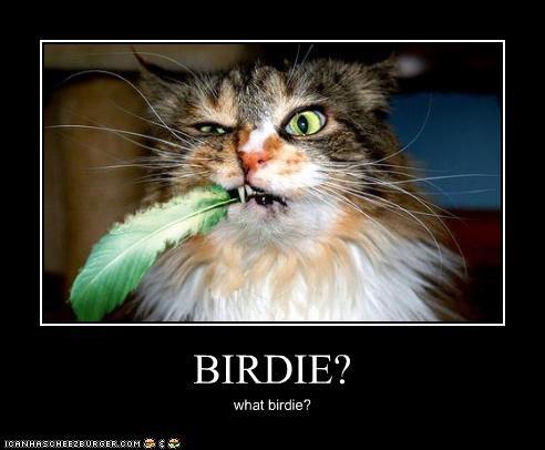 BIRDIE? what birdie?